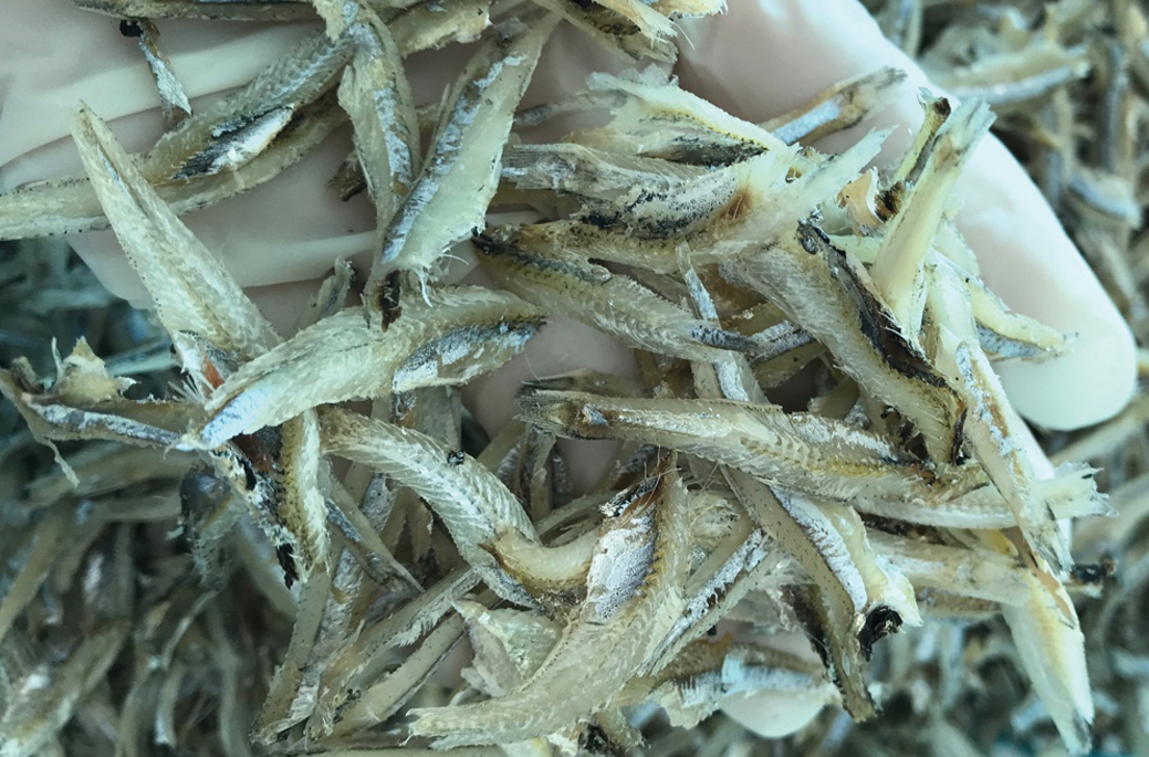 Dried boiled gray anchovy fillet original vietnam