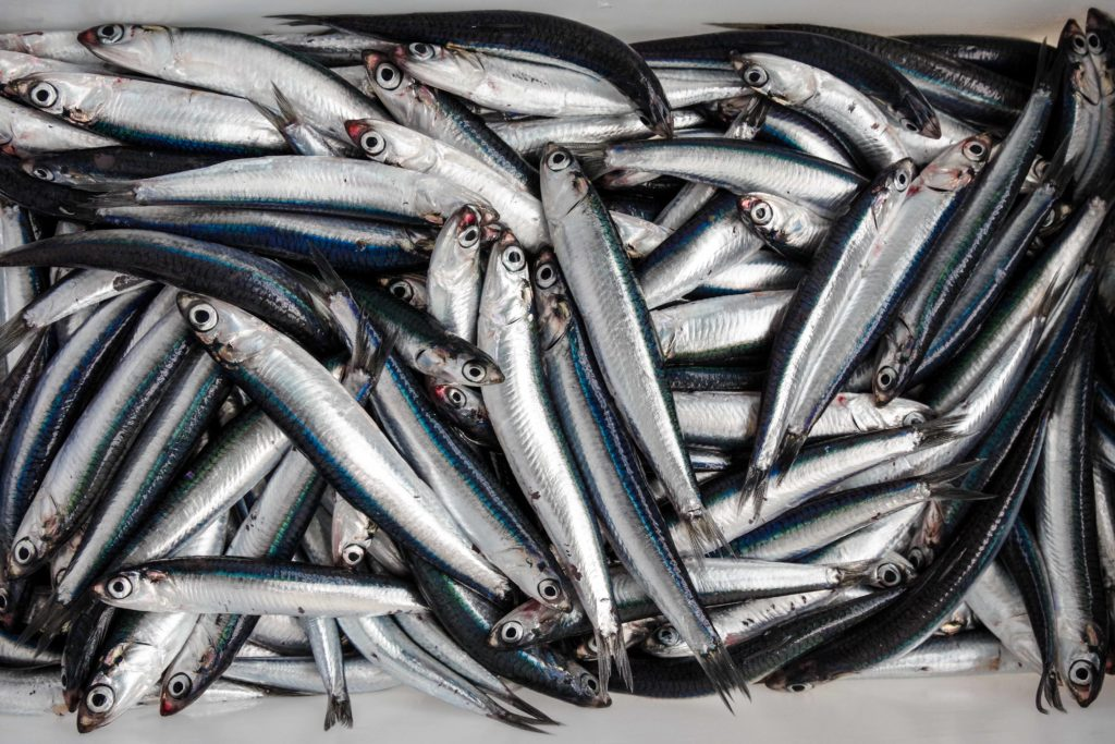 anchovy export in vietnam