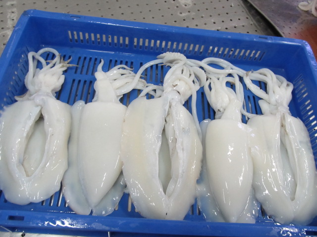 cuttlefish export in vietnam