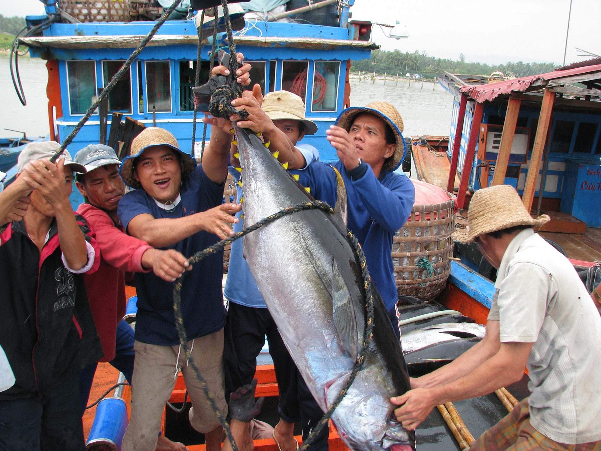 exporting tuna to asean from vietnam