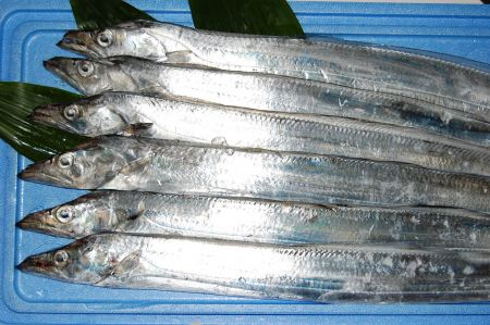 ribbon fish export from vietnam