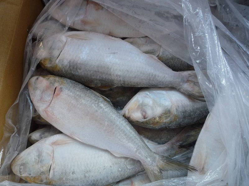 shad fish export in vietnam
