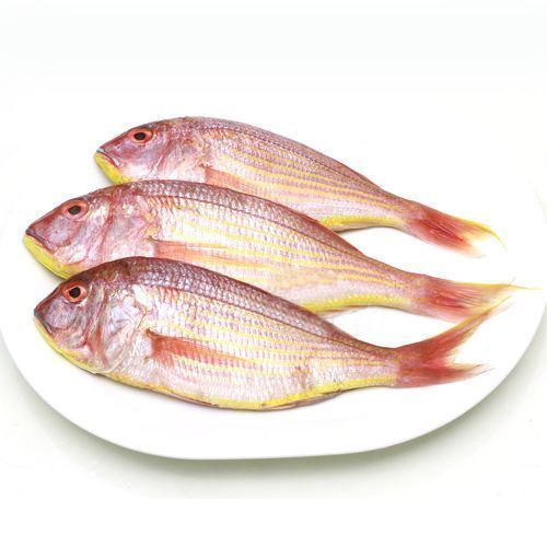 threadfin bream export in vietnam