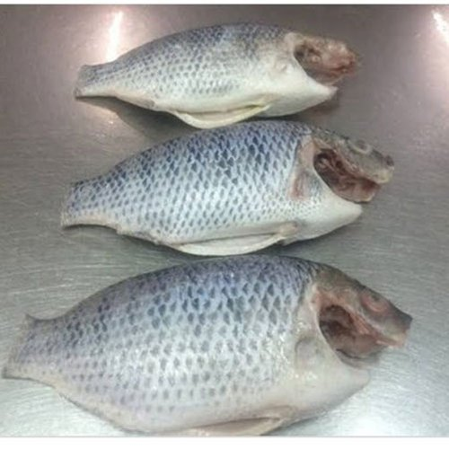 tilapia-moon-cut-fish-export